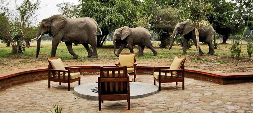 Elephants at thornicroft lodge